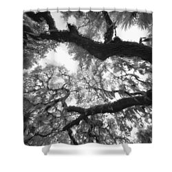 Hanging Moss Shower Curtain by Bradley R Youngberg