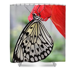 Hanging On #2 Shower Curtain by Judy Whitton