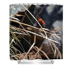 Hanging On Shower Curtain by Michele Myers