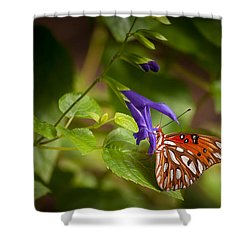 Hanging On Shower Curtain by Penny Lisowski