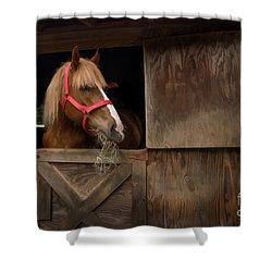 Hank Eating Hay Shower Curtain by Dan Friend