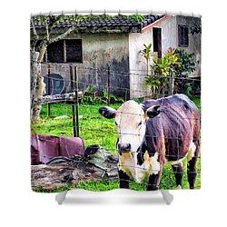 Shower Curtain featuring the photograph Hanzawa Cow 1 by Dawn Eshelman