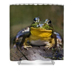 Happiness Frog Shower Curtain by Christina Rollo