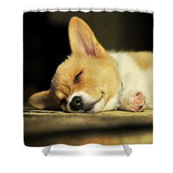 Happiness Is A Warm Corgi Puppy Shower Curtain by Rebecca Sherman