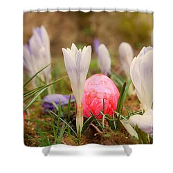 Shower Curtain featuring the photograph Happy Easter 2 by Christine Sponchia
