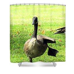 Happy Feet Dance Shower Curtain by Robyn King