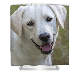 Happy Lab Shower Curtain by Stephen Anderson