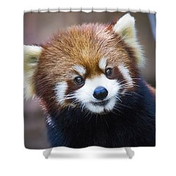 Happy Red Panda Shower Curtain