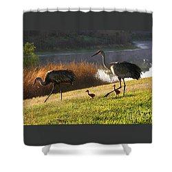 Happy Sandhill Crane Family Shower Curtain by Carol Groenen