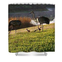 Happy Sandhill Crane Family - Original Shower Curtain by Carol Groenen