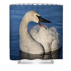 Shower Curtain featuring the photograph Happy Swan by Patti Deters