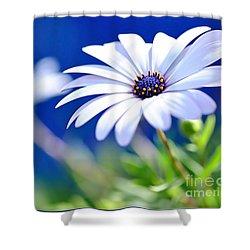 Happy White Daisy 2- Blue Bokeh  Shower Curtain by Kaye Menner