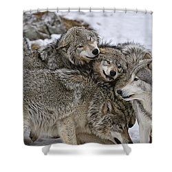 Happy Wolf Pack Shower Curtain