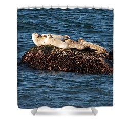 Shower Curtain featuring the photograph Harbor Seals Hauled Out by Bradford Martin
