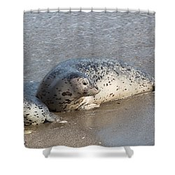 Harbor Seals In The Surf Shower Curtain