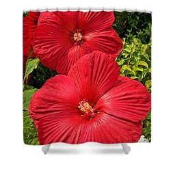 Hardy Hibiscus Shower Curtain by Sue Smith