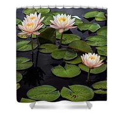 Hardy Waterlilies, Clyde Ikins Shower Curtain
