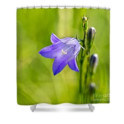 Harebell Shower Curtain by Dee Cresswell