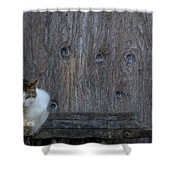 Shower Curtain featuring the photograph Harlequin Rustic by Chriss Pagani
