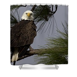Harriet The Bald Eagle Shower Curtain