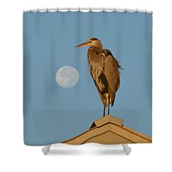 Shower Curtain featuring the photograph Harry The Heron Ponders A Trip To The Full Moon by Jeff at JSJ Photography