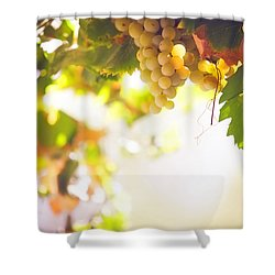 Harvest Time. Sunny Grapes I Shower Curtain by Jenny Rainbow
