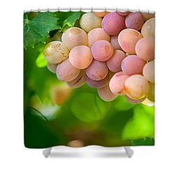 Harvest Time. Sunny Grapes Viii Shower Curtain by Jenny Rainbow