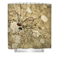 Shower Curtain featuring the photograph Harvestman Spider by Chevy Fleet