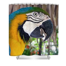 Harvey The Parrot 2 Shower Curtain
