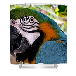 Harvey Shower Curtain