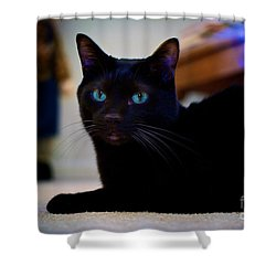 Havana Brown Cat Shower Curtain