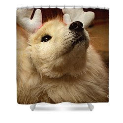 Have I Been A Good Doggie? Shower Curtain by Lois Bryan