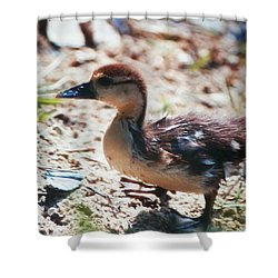 Lost Baby Duckling Shower Curtain by Belinda Lee