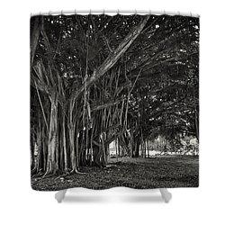 Hawaiian Banyan Tree Root Study Shower Curtain by Daniel Hagerman