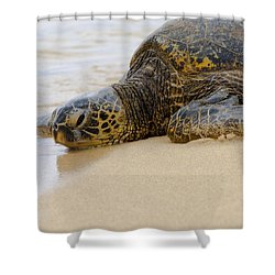 Hawaiian Green Sea Turtle 3 Shower Curtain by Brian Harig
