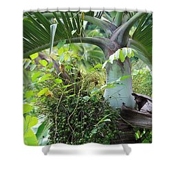 Hawaiian Palm Inflorescence  Shower Curtain by Karon Melillo DeVega