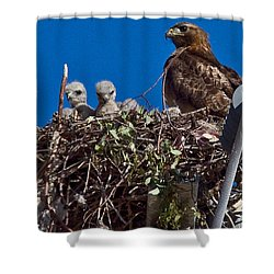 Shower Curtain featuring the photograph Hawk Babies by Brian Williamson