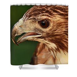 Hawk Eyes Shower Curtain by Dan Sproul