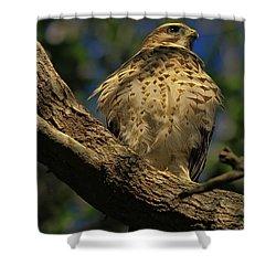 Hawk In Soft Light Shower Curtain by Deborah Benoit