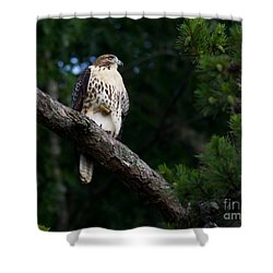 Hawk On Norris Lake Shower Curtain by Douglas Stucky