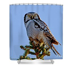 Hawk Owl Square Shower Curtain by Torbjorn Swenelius