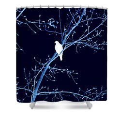 Hawk Silhouette On Blue Shower Curtain by Lesa Fine