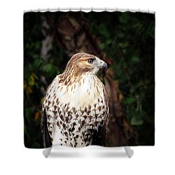 Shower Curtain featuring the photograph Hawkeye by Greg Simmons