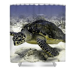 Hawksbill Caribbean Sea Turtle Shower Curtain