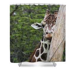 Shower Curtain featuring the photograph Hay Not Just For Horses by Judy Whitton