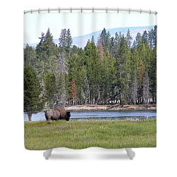 Hayden Valley Bison Shower Curtain by Laurel Powell