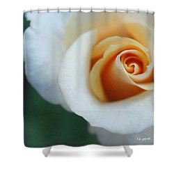 Hazy Rose Squared Shower Curtain by TK Goforth