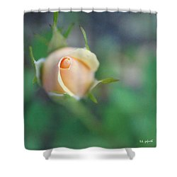 Hazy Rosebud Squared Shower Curtain by TK Goforth