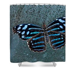Hdr Butterfly Shower Curtain by Elaine Malott