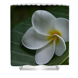 He Aloha No O Waianapanapa - White Tropical Plumeria - Maui Hawaii Shower Curtain by Sharon Mau
